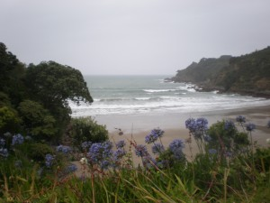 All was not right on Waiheke Island